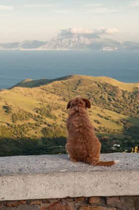 Hund in Andalusien