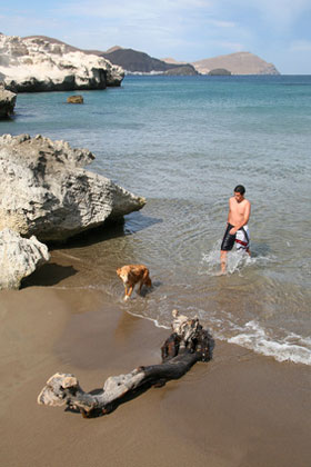 hund aus andalusien